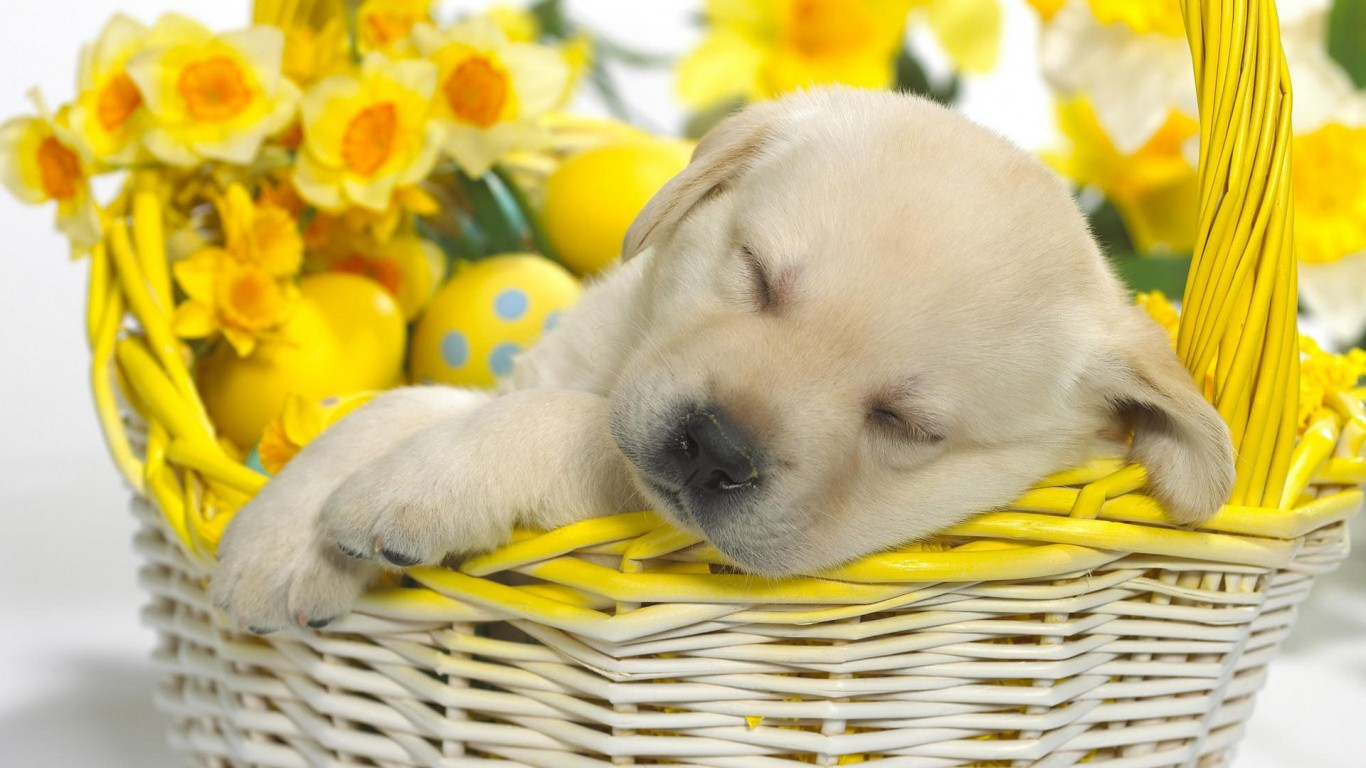 Puppy  Basket  Easter