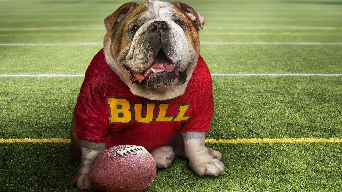 Ball  Football  Dear  Dog