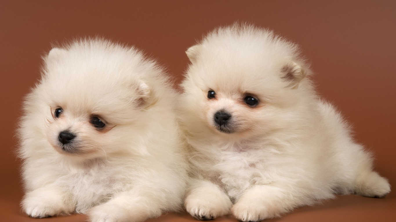 Puppies  Cuties  White