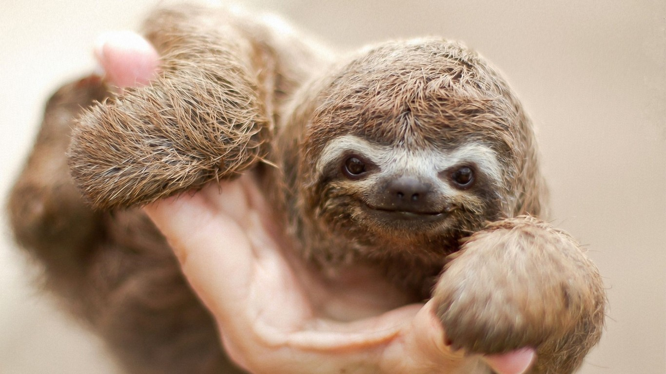 Sloth  Pleasant  Smile