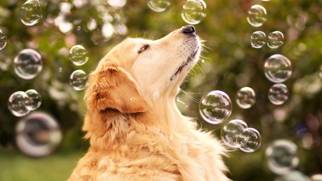 Dog  Friend  Bubbles