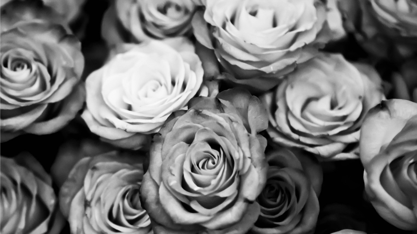 Roses Black And White