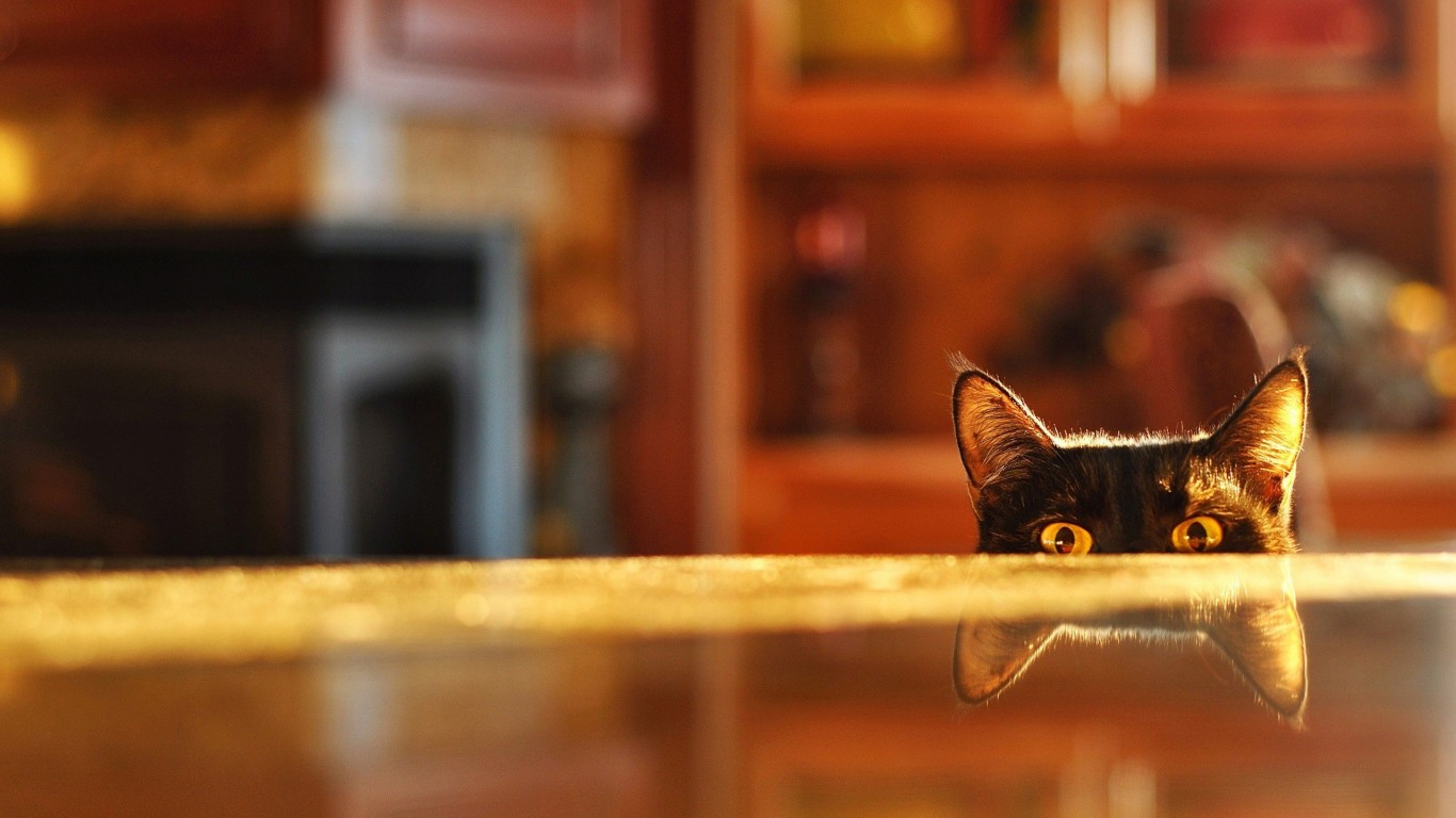 Table  Eyes  Ears  Cat