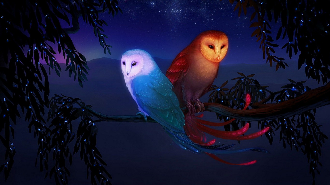 Owls  Night  Birds  On A Branch