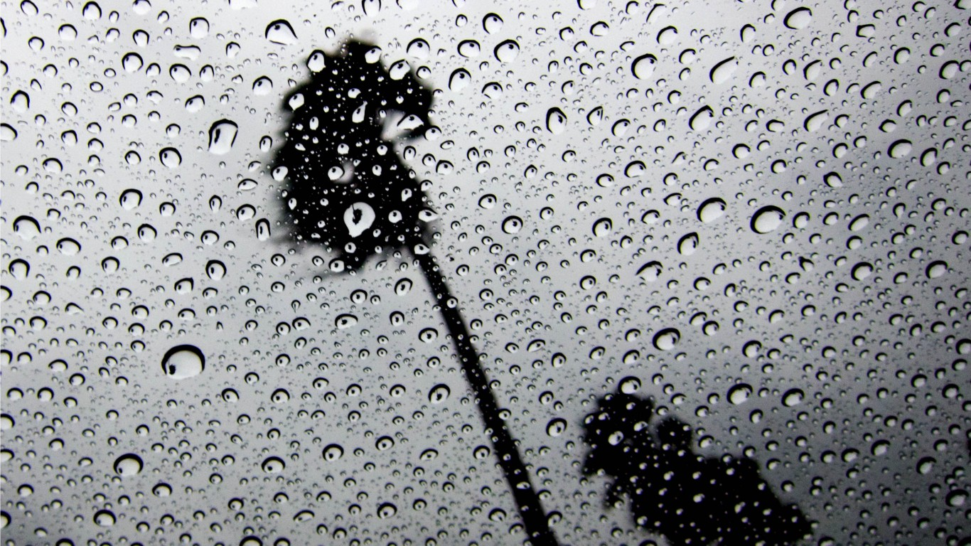 Palm Trees In The Rain Through The Skylight