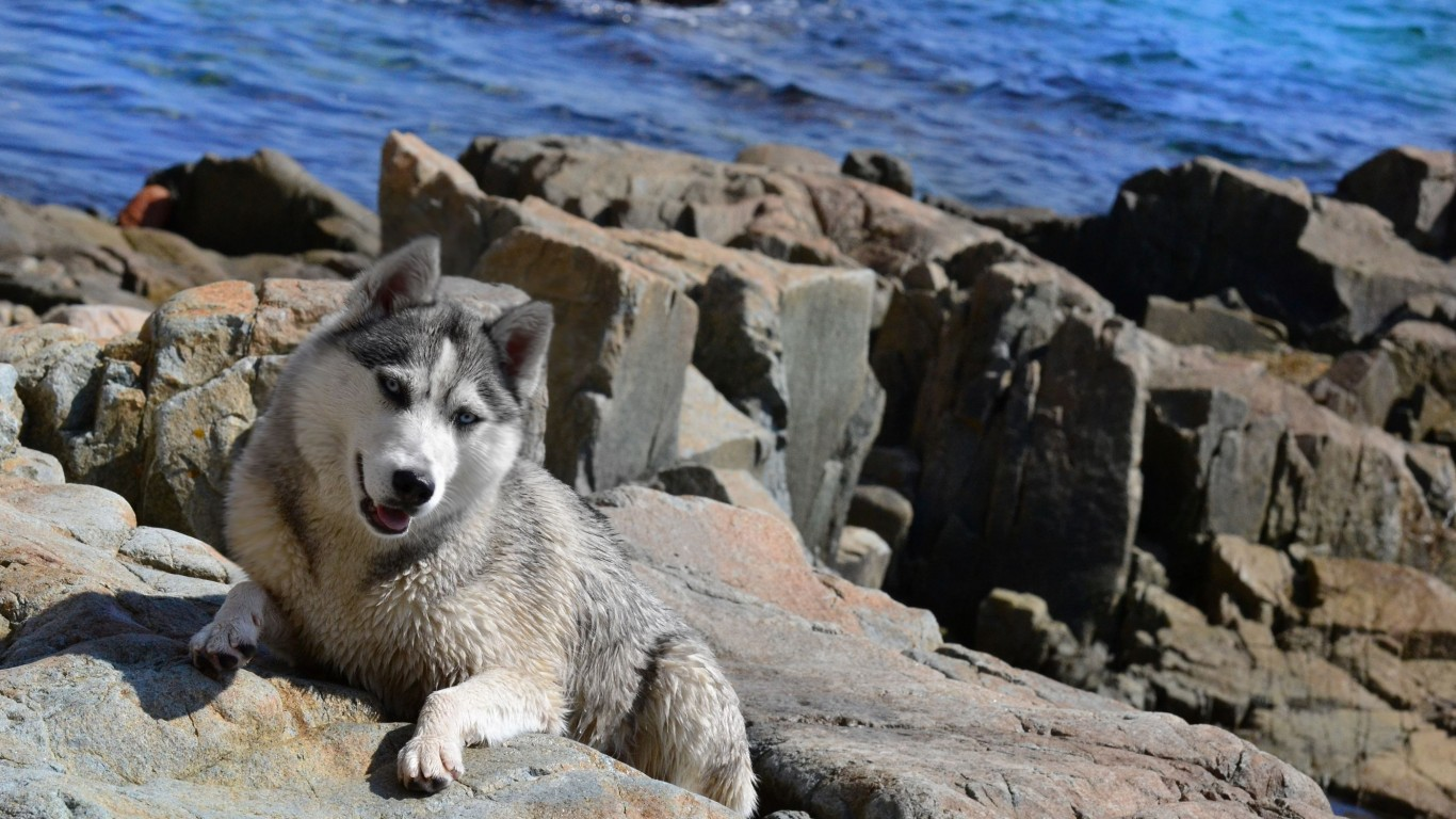 Dog  Husky  Sea  Dog Of The Sea  Wallpaper  Summer