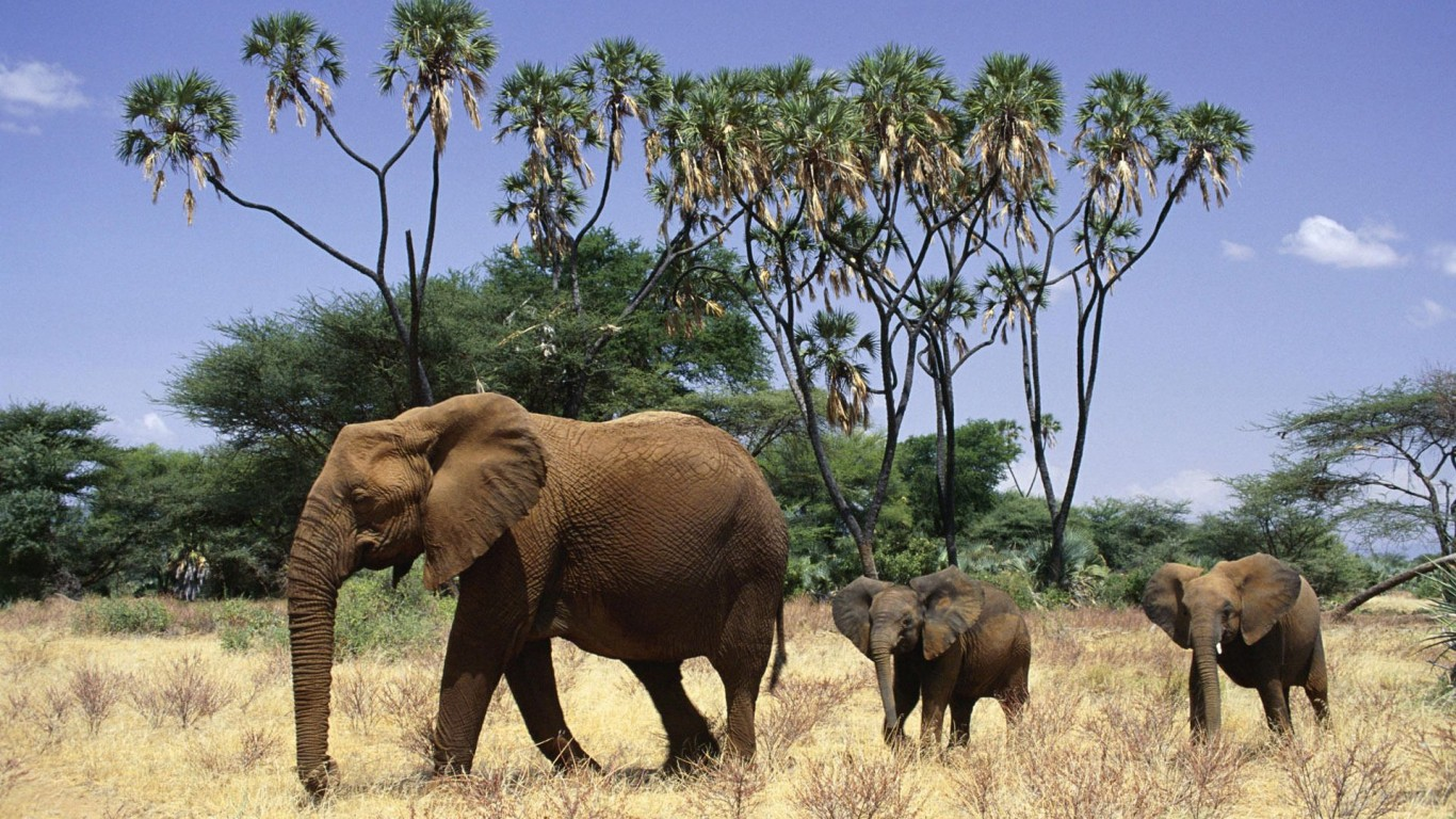 Elephants  Africa  Nature