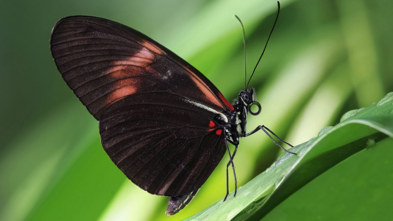 Insects  Butterfly  Macro