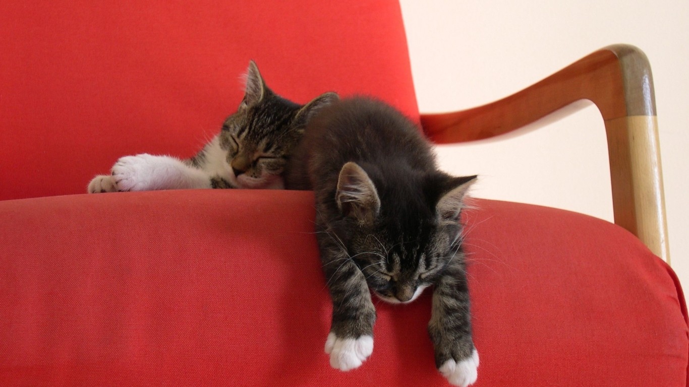 Kittens  Two  Sleep  Chair  Red Cape
