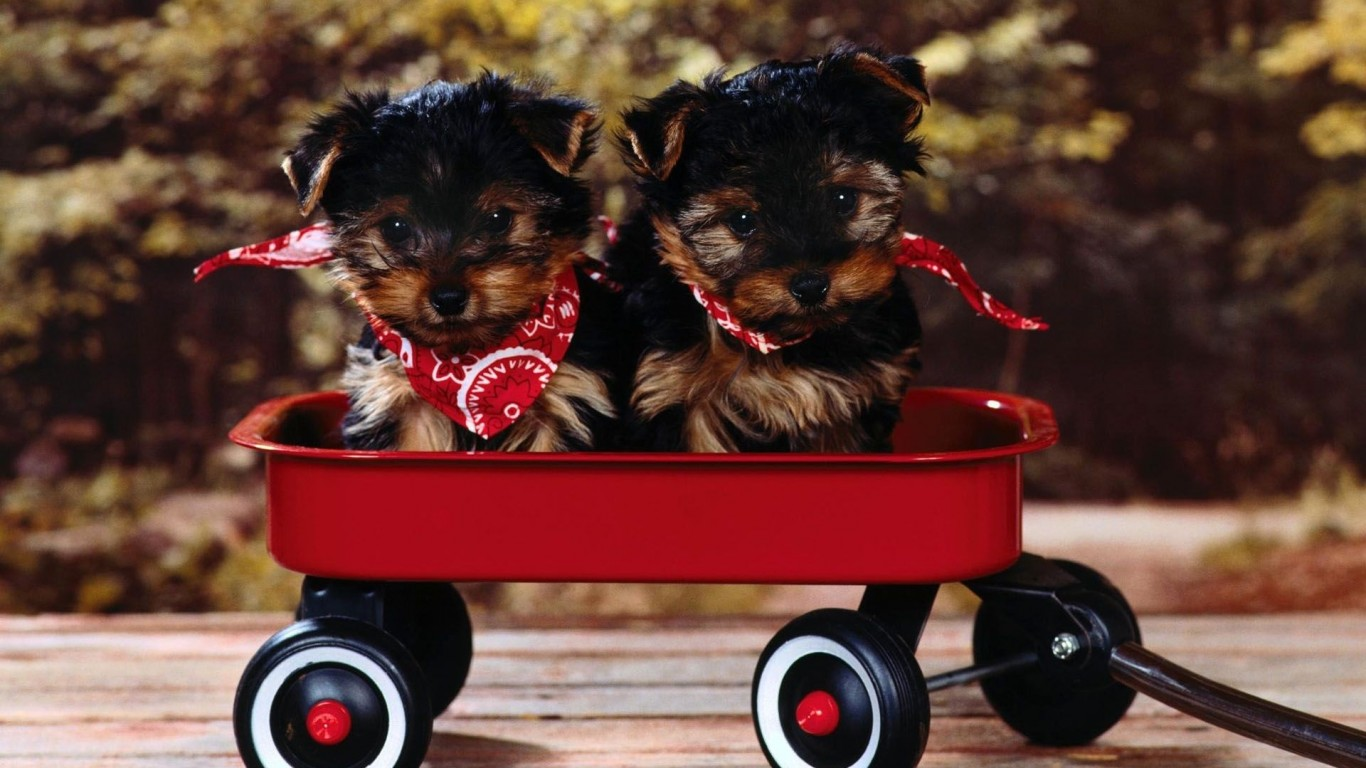 Puppies  Trolley  Snout