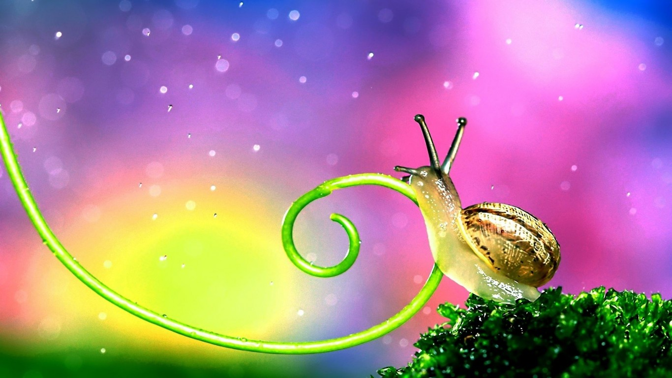Snail  On The Green  Antennae