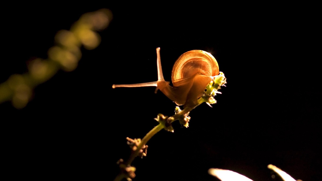 Snail  Plant  Light