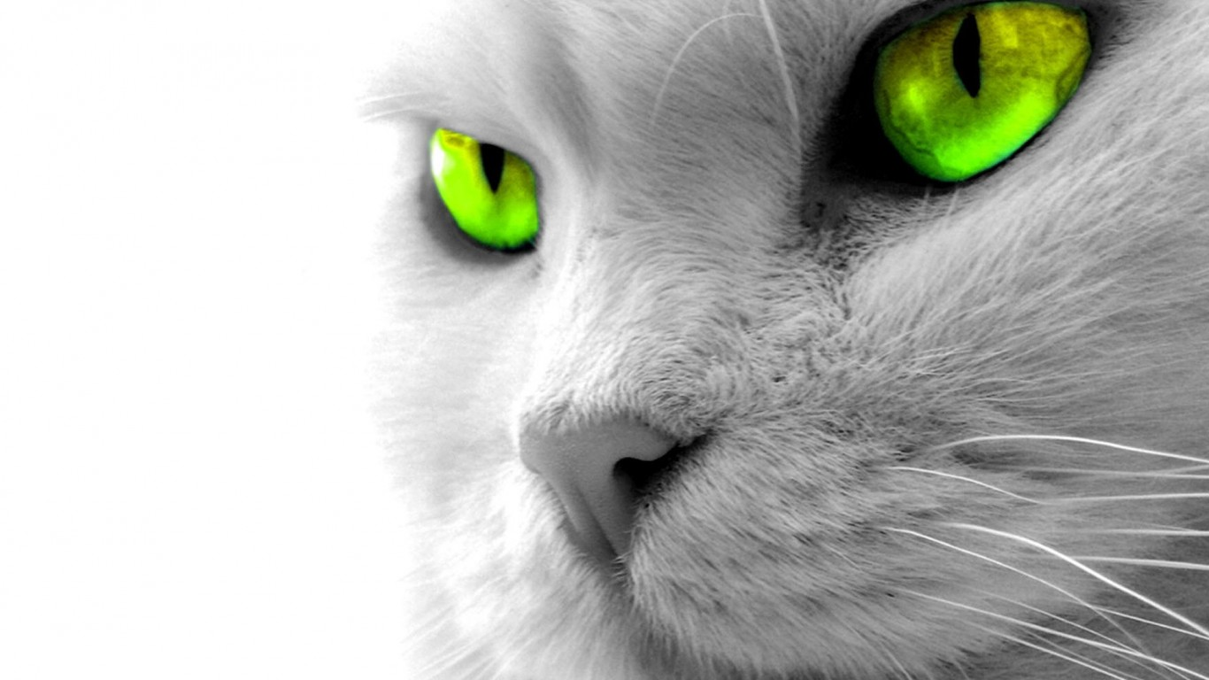 Cat  Gray  Eyes  Green