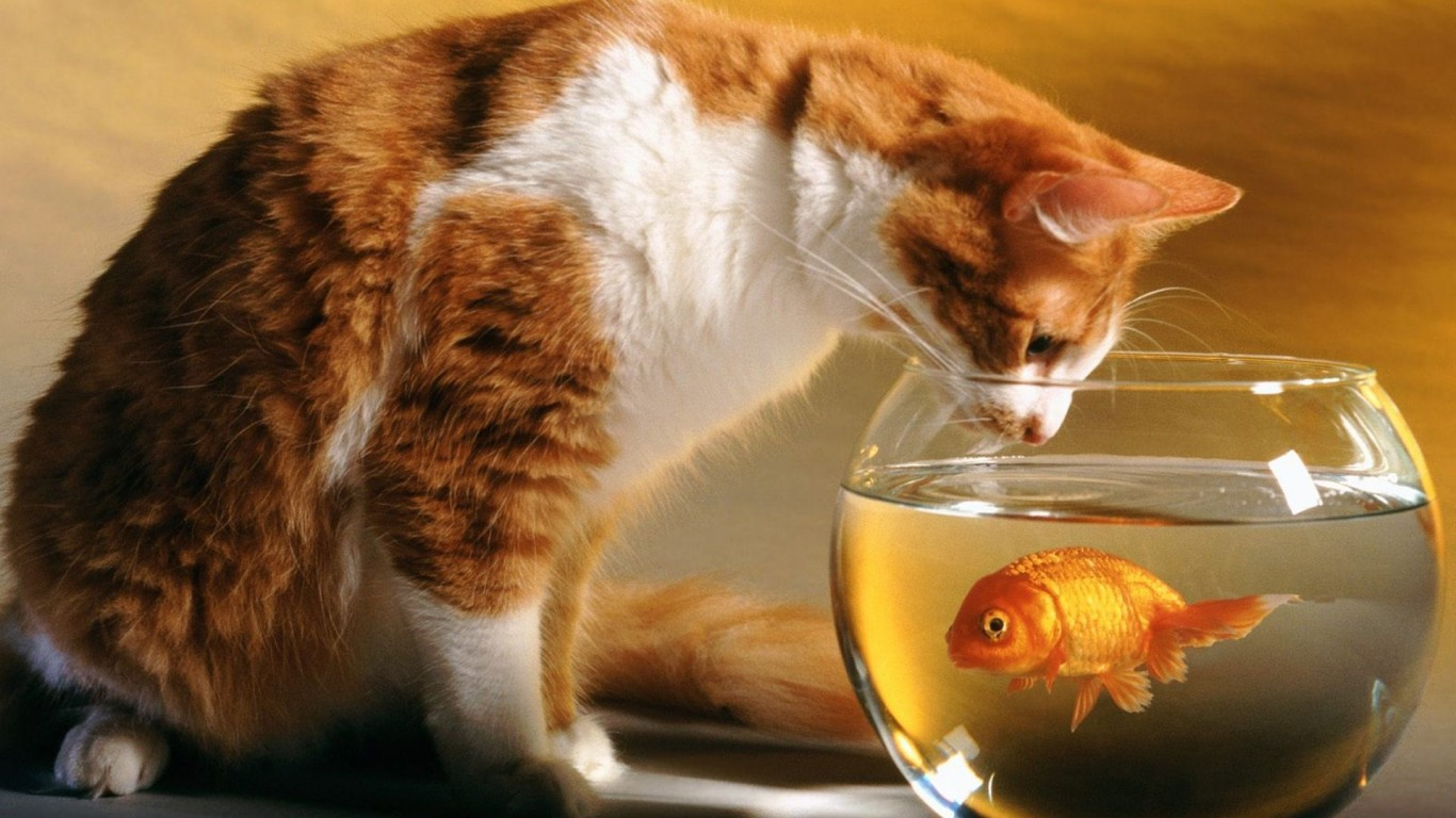 Cat  Small Fish