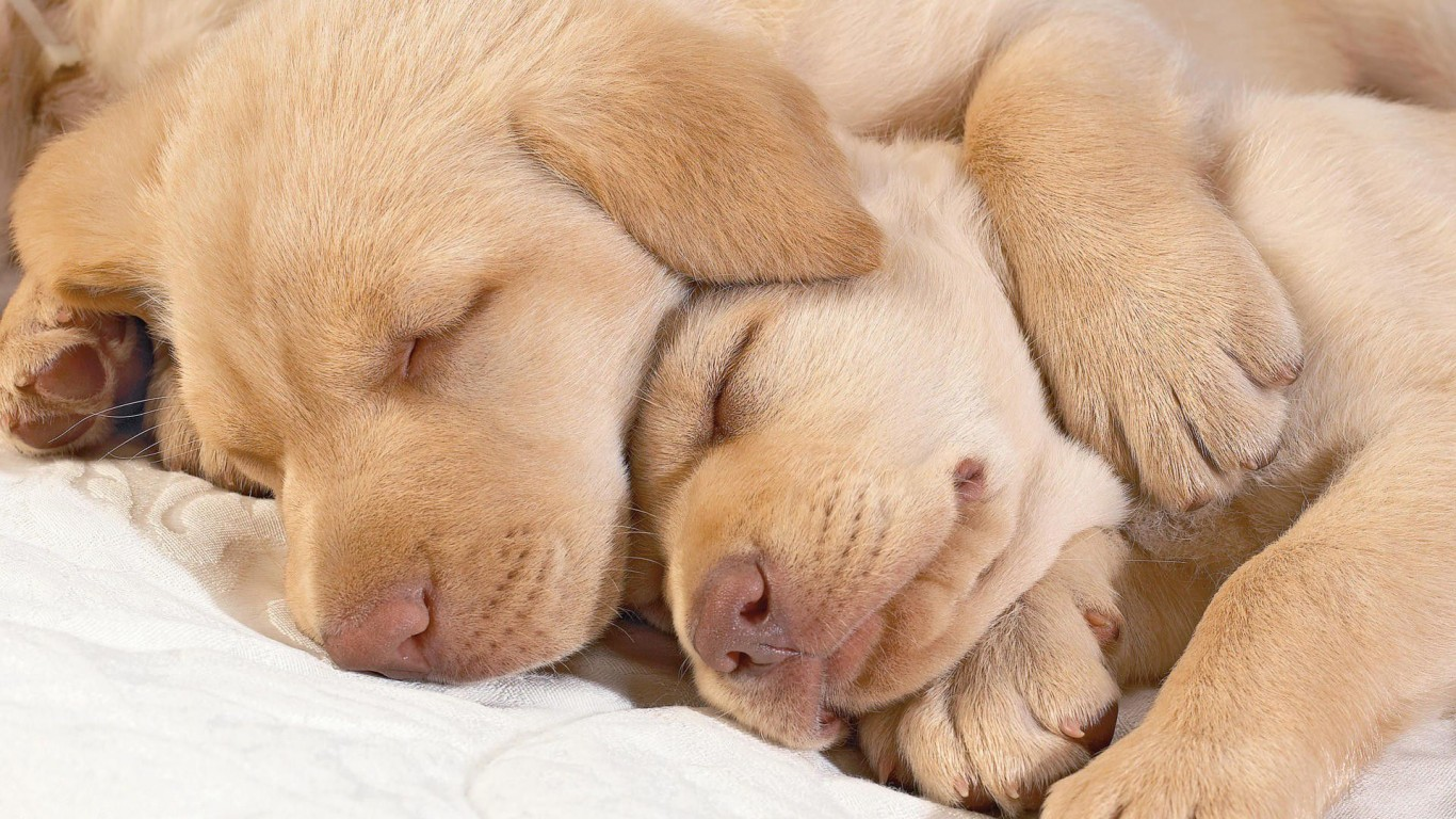 Puppies  Sleep  Two