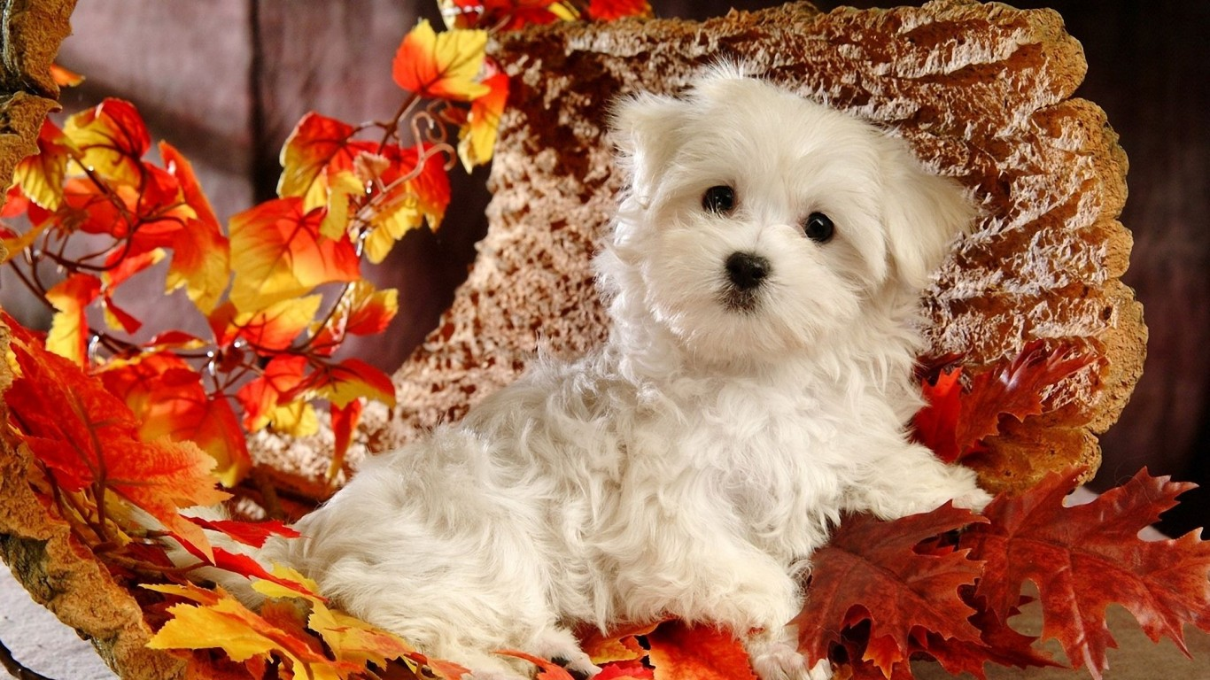 Puppy  Dog  White  Leaves