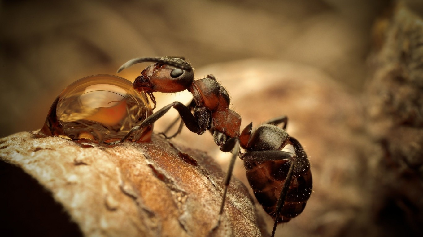 Insect  Macro  Ant